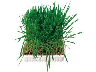 Трава для грызунов 100гр Trixie 6035