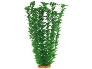 Растение для аквариума 55см 5559