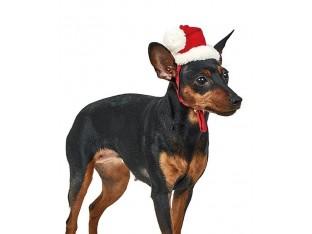 Колпак новогодний для собак M